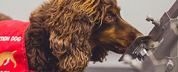 コロナ探知犬エース